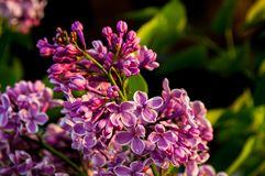Purple flowers with blurred background stock photo