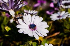 Purple flowers with blurred background royalty free stock images