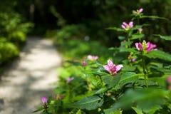 Purple flowers in botanic garden stock photography