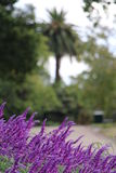 Purple Flowers In Botanical Gardens Stock Photo