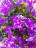 Purple flowers in a bouquet. Purple flowers bouquet colors bloom stock image