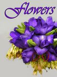 Purple Flowers Bouquet, Floral Gift Wishes Royalty Free Stock Image