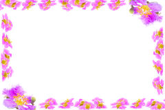 Purple flowers branches frame isolated on white background Stock Photos