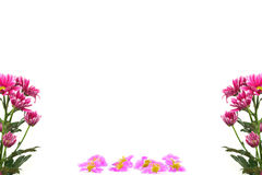Purple flowers branches frame isolated on white background Royalty Free Stock Image