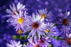 Purple Flowers. Bright purple wild flowers with a purple bokeh background stock photography