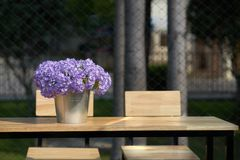 Purple flowers in bucket vase on wooden table with chairs with s royalty free stock photography