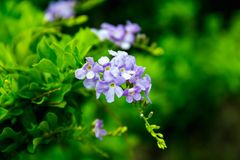Purple flowers are a bunch of green. Backgrounds blurred Stock Images