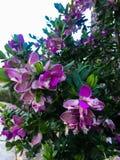 Purple flowers bush stock images