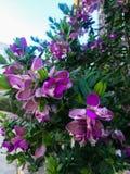 Purple flowers on bush stock photo