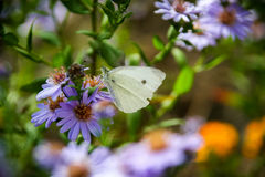 Purple flowers, butterfly Stock Images