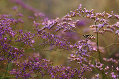 Purple flowers and butterfly on summer meadow. Royalty Free Stock Image