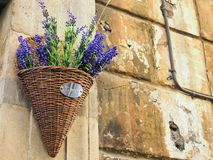 Purple Flowers in Cane Basket, Rome Royalty Free Stock Image