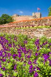 Purple flowers and castle Stock Photography
