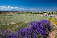 Purple flowers and cemetery Stock Photos