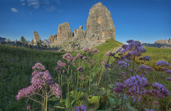 Purple flowers and Cinque Torri mountains, Dolomites, Veneto, Italy Royalty Free Stock Photography