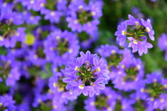Purple flowers in circular patterns Royalty Free Stock Image