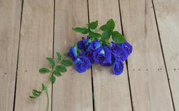 Purple flowers. Clitoria ternatea L. placed on the wooden floor Stock Photography