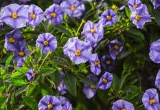 Purple Flowers Close up. Nice purple flowers close up Royalty Free Stock Photos