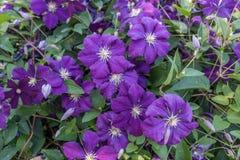 Purple Flowers Closeup Stock Photo