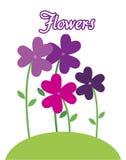 Purple flowers. Flowers purple design over white background vector illustration Stock Photo
