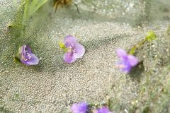 Purple flowers and dew drops stock image