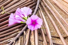 Purple flowers on dried coconut leaves by the sea.  Stock Photography