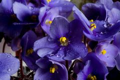 Purple flowers and drops