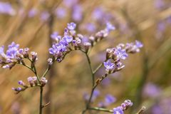Purple flowers with dry grass in summer field closeup. Blooming concept. Herb and flowers background. stock photo