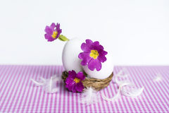 Purple flowers in  eggshells Stock Image