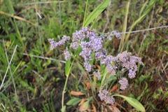 Purple flowers field 18388 Stock Photo