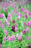 Purple flowers in the field Stock Image