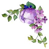 Purple flowers. Isolated flower illustration element. Background set. Watercolour drawing aquarelle bouquet. Purple flowers. Floral botanical flower. Isolated royalty free illustration