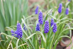Purple flowers in the flowerbed. royalty free stock photo