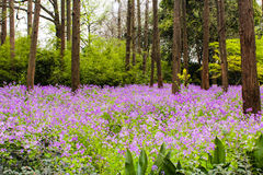 purple flowers in the forest Royalty Free Stock Photos