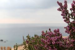 Medicinal plant against the sea royalty free stock photo