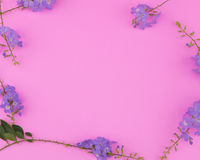 Purple flowers frame Royalty Free Stock Images
