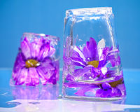 Purple Flowers Frozen in Ice Stock Photo