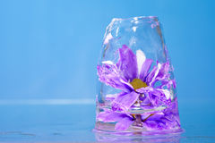 Purple Flowers Frozen in Ice Royalty Free Stock Photos
