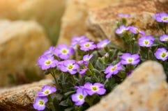 Purple flowers. On the garden Royalty Free Stock Photos