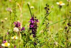Purple flowers. Flowers in garden Royalty Free Stock Photo