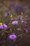 Purple flowers in the garden Stock Photos