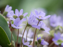 Purple flowers in garden Stock Photos