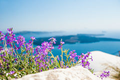 Purple flowers in the garden with sea view Royalty Free Stock Photos
