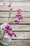 Purple flowers in glass bottles. Lilac flower in a glass bottle on a  old background Royalty Free Stock Photos