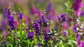 Purple flowers in grass field moving camera. Purple flowers in a field moving camera stock footage