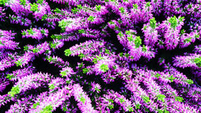 Purple flowers and green accent Stock Image