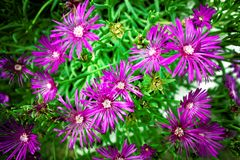 Purple flowers in close up royalty free stock photo