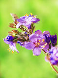 Purple flowers on green background. Pretty summer purple flowers on green background Royalty Free Stock Photography