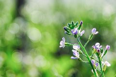 Purple flowers on green beautiful blurred and bokeh royalty free stock photography