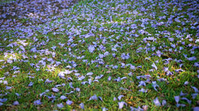 Purple flowers on green grass Stock Images